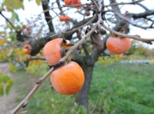 Image for Fruiting Trees
