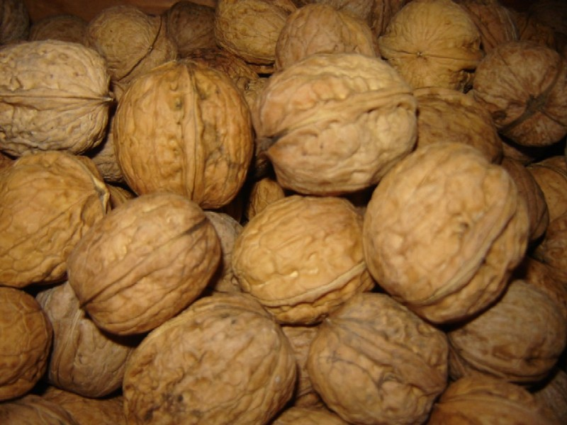 Products - Nuts To Eat - Grimo Nut Nursery