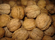 Persian Walnuts in-shell Image