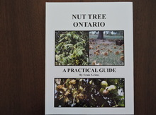 Nut Tree Ontario - A Practical Guide Image