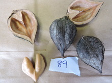 Grimo 89 Heartnut Graft  NEW Image